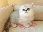 Quels soins donner à votre chaton ?