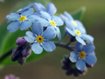 Semez pour le printemps