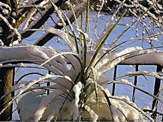 Plante couverte de neige