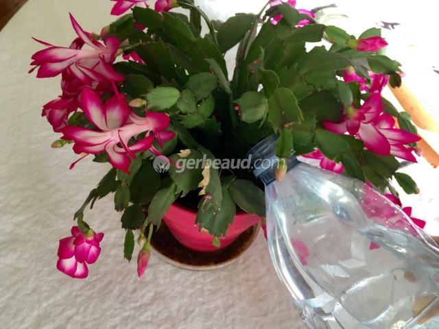Arrosage des cactus et des succulentes : fréquence, quelle eau