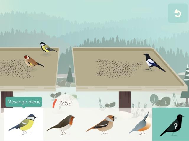 BirdLab : observez le comportement des oiseaux à la mangeoire