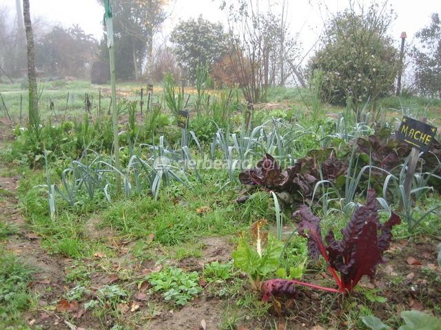 Prot ger la terre du potager en hiver for Entretien du jardin en hiver