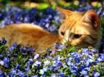 Plantes anti-chiens et chats