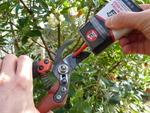 Entretenir ses outils de jardin