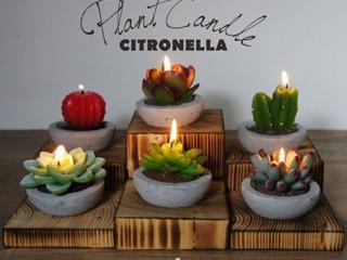 Bougies cactus à la citronnelle