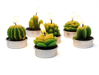 Bougies cactus chauffe-plat
