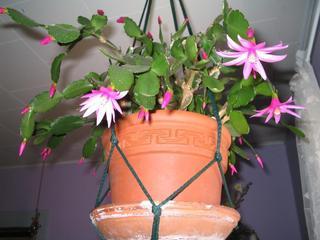 plantes d 39 int rieur fleuries et faciles cultiver. Black Bedroom Furniture Sets. Home Design Ideas