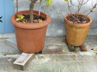 plantes en pot protection contre le gel. Black Bedroom Furniture Sets. Home Design Ideas