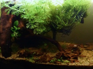 Aquascaping : paysage terrestre