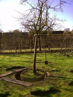 Transplanter un grand arbre : cernage, extraction, replantation