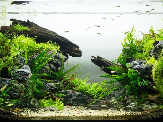 l 39 aquascaping d finition et cr ation d 39 un aquarium plant. Black Bedroom Furniture Sets. Home Design Ideas