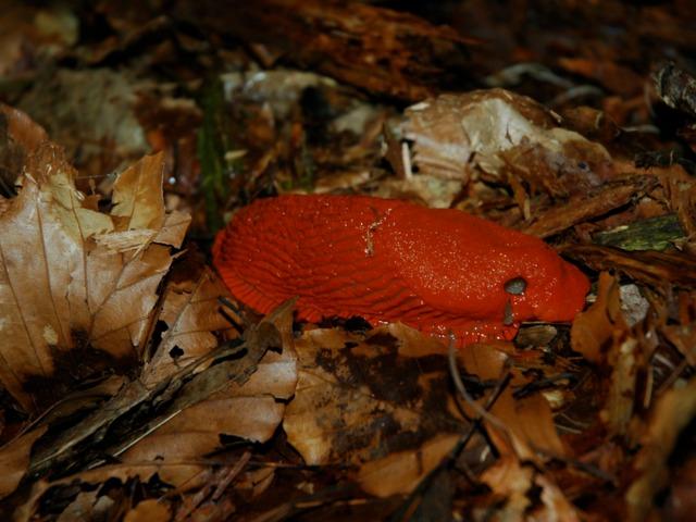 La faune du compost : petits animaux, insectes, vers...
