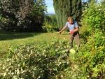 Recycler les déchets du jardin