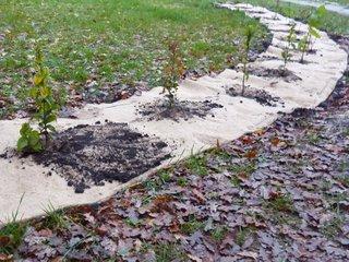 Plantation d'arbustes sur une toile en fibres végétales