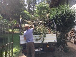 Evacuation de déchets verts