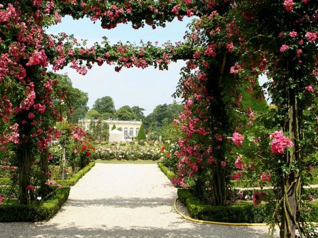 Les rosiers lianes : les meilleures variétés et comment les tailler