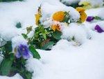 Neige et plantes : que faire ?