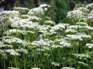 Pourquoi et comment accueillir des plantes sauvages dans le jardin ?
