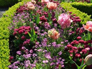 Un massif rose pour le printemps