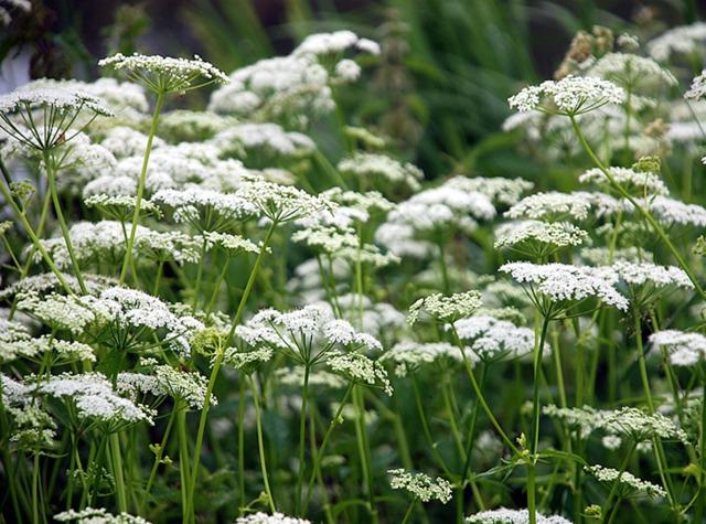 Les plantes sauvages : bonnes pour le jardin