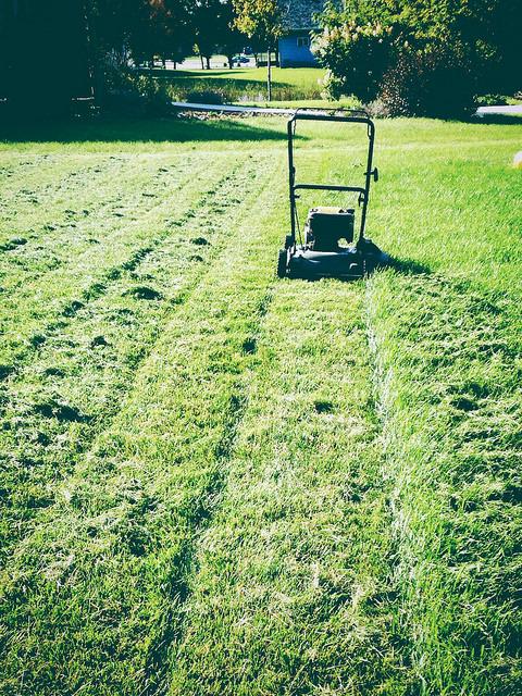 L'herbe tondue est utile au jardin