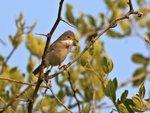 Les oiseaux disparaissent à grande vitesse des campagnes françaises
