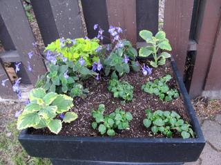 Une jardinière à l'ombre : quelles plantes ?