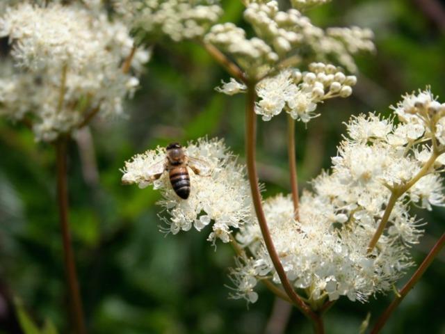 10 Fleurs Melliferes Pour Attirer Les Pollinisateurs
