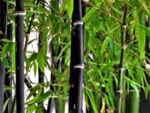 Couvre sol tous nos sujets - Quel terreau pour bambou ...