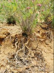 Le système racinaire : fonction et différents types de racines