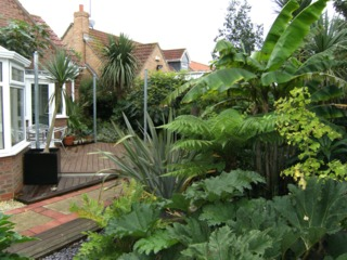 Un massif comme une jungle : quelles plantes ?