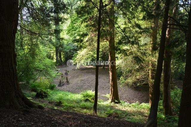 Sous-bois clair (Jardins et parc du Bois des Moutiers)