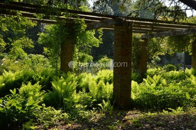 Jeux de lumière sur les fougères (Jardins et parc du Bois des Moutiers)