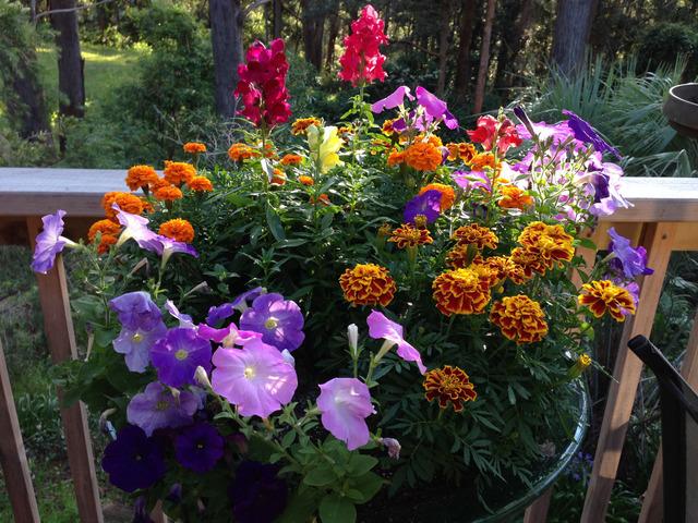 r ussir de belles jardini res quelles plantes associer. Black Bedroom Furniture Sets. Home Design Ideas