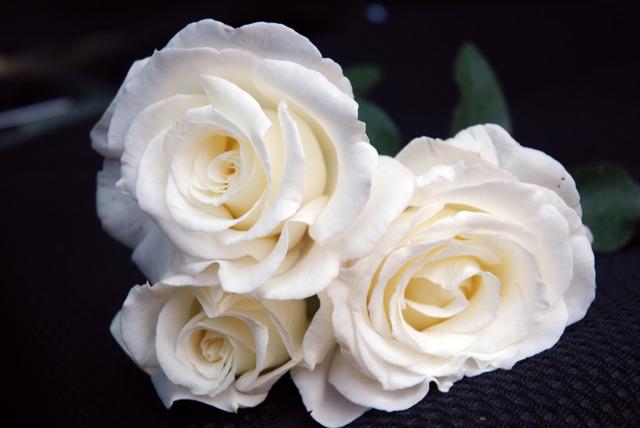 rosier grandes fleurs fr d ric dard guifr dar massad. Black Bedroom Furniture Sets. Home Design Ideas