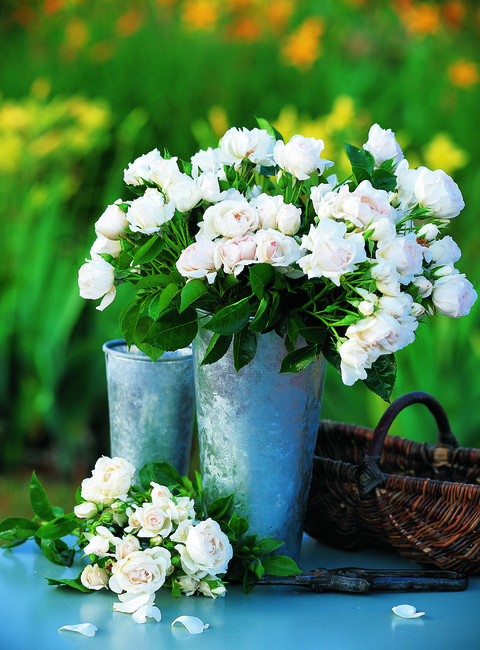 rosier buisson fleurs group es dominique loiseau. Black Bedroom Furniture Sets. Home Design Ideas