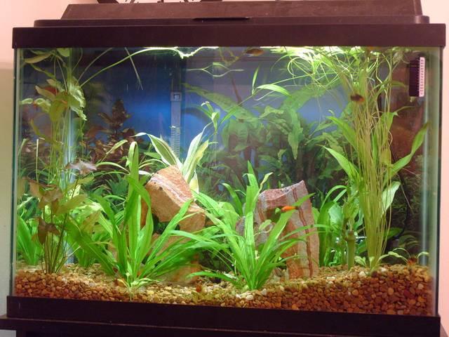 Créer un premier aquarium : l'essentiel à savoir