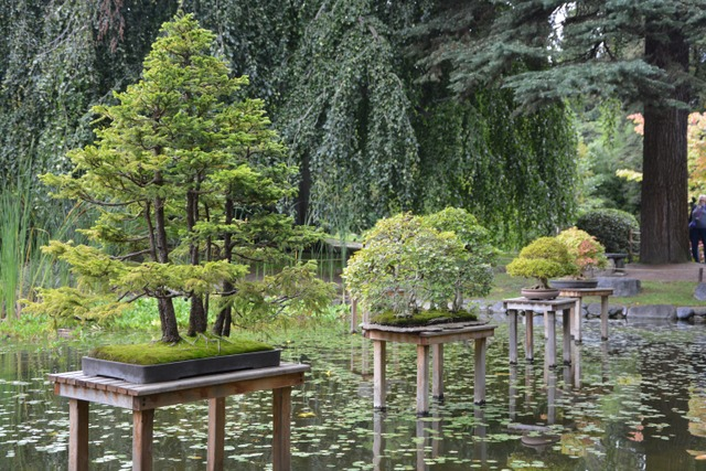 Jardin Albert Kahn (Hauts-de-Seine) (Les plus beaux jardins de France)
