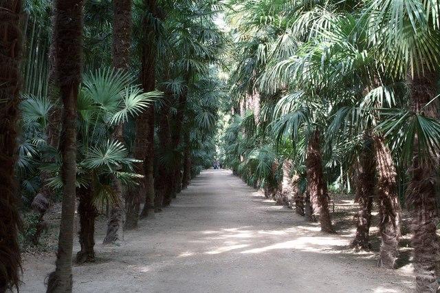 Bambouseraie de Prafrance (Gard) (Les plus beaux jardins de France)