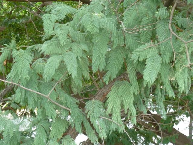 La communication chez les plantes : un langage silencieux