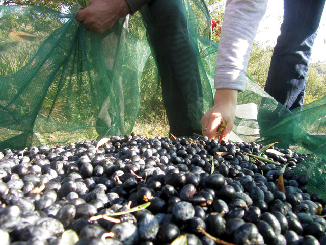 Comment choisir une huile d'olive ?