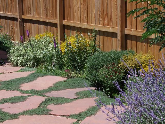 Dalles : plantes adaptées aux interstices