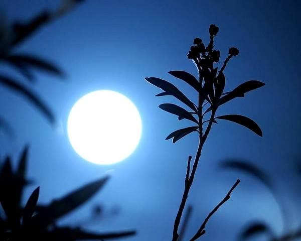 Que faire au jardin en lune descendante ?