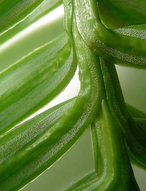 Comment respirent les plantes ?