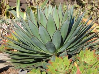 Les Plantes Mediterraneennes Fiches Pratiques