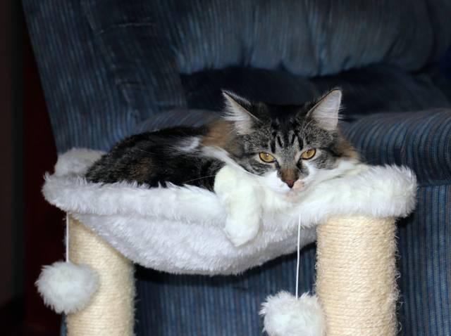 Un arbre à chat : en quoi est-ce utile ?