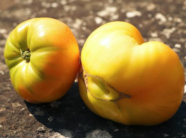 Caractéristiques de la tomate ananas et comment la cultiver