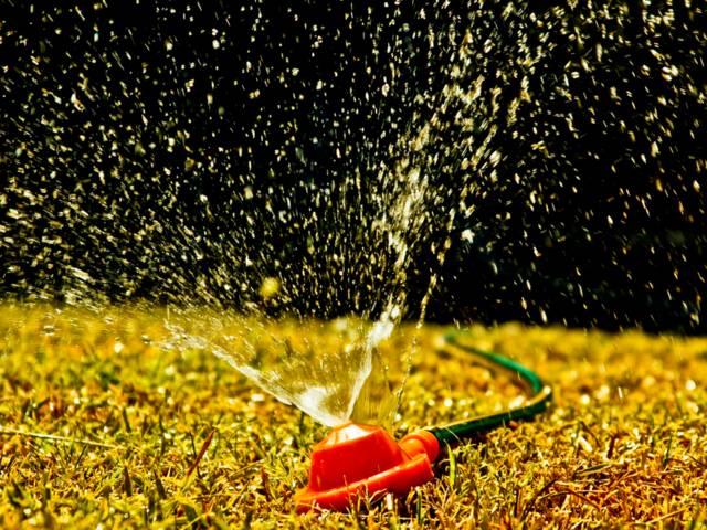 L'arrosage de la pelouse