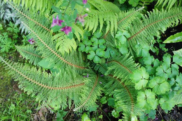 Plantes Sans-Souci : les vraies alliées des jardiniers