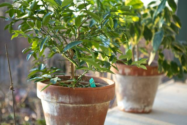 Plantes vertes : les sortir dans le jardin pour l'été; nos conseils